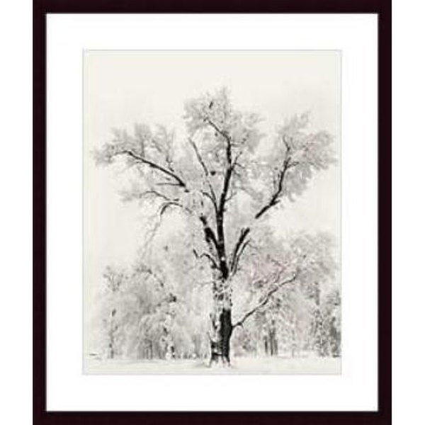 Ansel Adams X27 Oak Tree Wood Framed Art Print