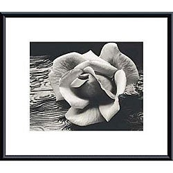 Ansel Adams 'Rose and Driftwood' Metal Framed Art Print