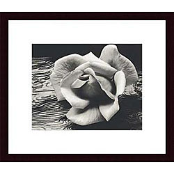 Ansel Adams 'Rose and Driftwood' Wood Framed Art Print