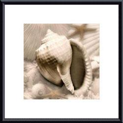 Donna Geissler 'Iridescent Seashell III' Framed Print