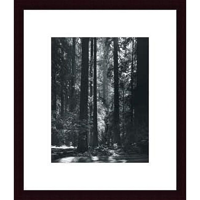 Ansel Adams 'Redwoods, Founders Grove' Wood Framed Art Print