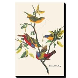 John James Audubon 'Painted Bunting' Gallery-wrapped Canvas Art