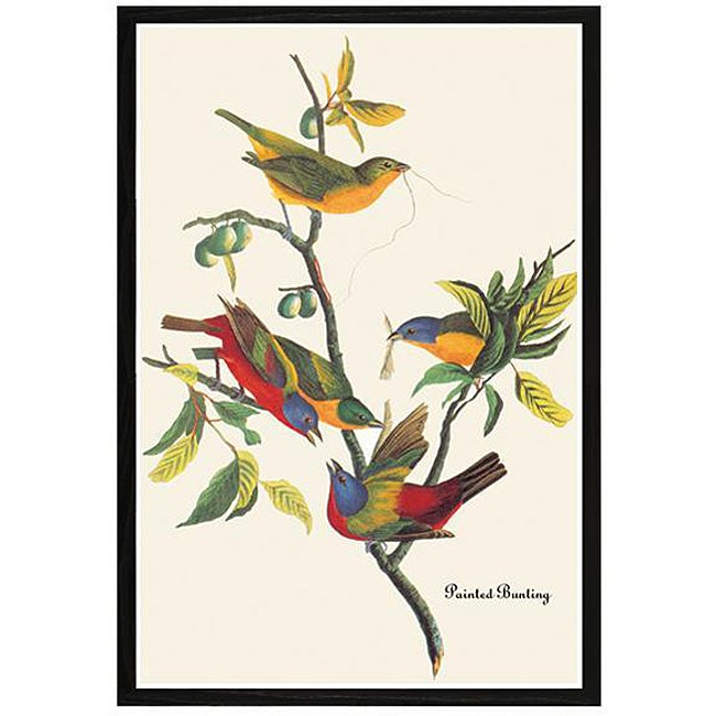 202674e89ac Shop John James Audubon  Painted Bunting  Framed Print Art - Free Shipping  Today - Overstock - 4268775