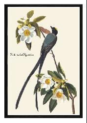 John James Audubon 'Fork Tail Fly Catcher' Framed Print Art - Thumbnail 1