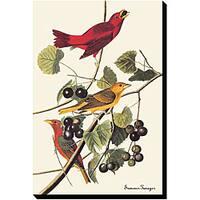 John James Audubon 'Summer Tanger' Giclee Canvas Art