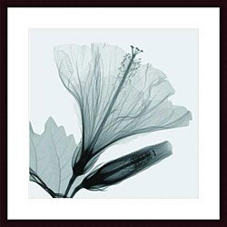 Steven Meyers 'Hibiscus Bud' Wood Framed Art Print