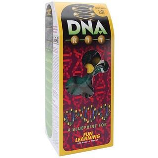 Styrofoam Painted DNA Kit