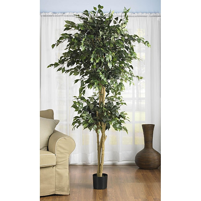 Double Ball 6-foot Ficus Silk Tree