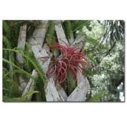 Patty Tuggle 'Air Plant in Pink' Gallery-wrapped Canvas Art - Thumbnail 1