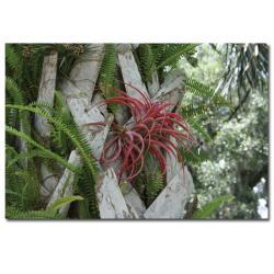 Patty Tuggle 'Air Plant in Pink' Gallery-wrapped Canvas Art - Thumbnail 2