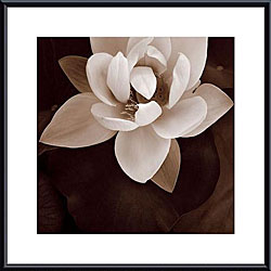 Rebecca Swanson 'Amazon Lotus' Metal Framed Art