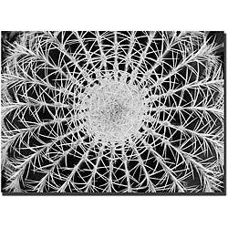 Kurt Shaffer 'Barrel Cactus' Gallery-wrapped Canvas Art