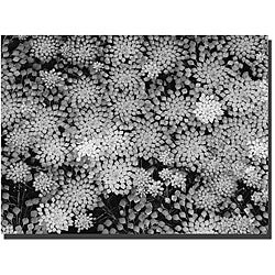 Kurt Shaffer 'Pattern on a Pond II' Gallery-wrapped Canvas Art