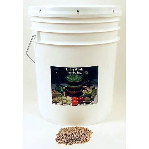 Living Whole Foods Organic Spelt Grain Seeds (35-pound Bucket)