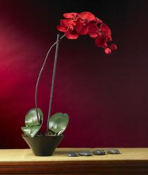 Holiday Faux Phalaenopsis Orchid Arrangement - Thumbnail 1