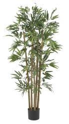 Multi Bambusa 4-foot Bamboo Silk Tree - Thumbnail 2