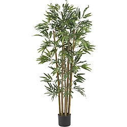 Multi Bambusa 4-foot Bamboo Silk Tree