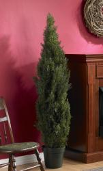 Mini 5 Foot Indoor Outdoor Cedar Pine Tree Free