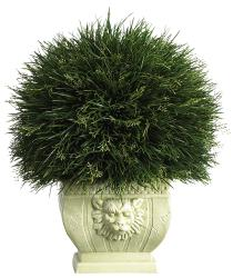 Potted Acorus Grass with White Vase - Thumbnail 1