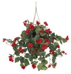 Begonia Hanging Basket - Thumbnail 1