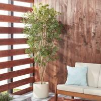 Japanese Maple 6-foot Silk Tree