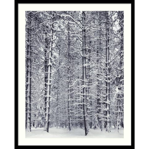Framed Art Print 'Pine Forest in the Snow, Yosemite National Park' by Ansel Adams 25 x 31-inch
