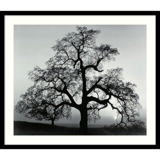 Ansel Adams 'Oak Tree, Sunset City, California, 1962' Framed Art Print