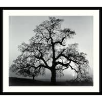 Framed Art Print 'Oak Tree, Sunset City, California, 1962' by Ansel Adams 27 x 23-inch
