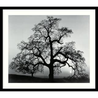 Framed Art Print 'Oak Tree, Sunset City, California, 1962' by Ansel Adams 27 x 23-inch