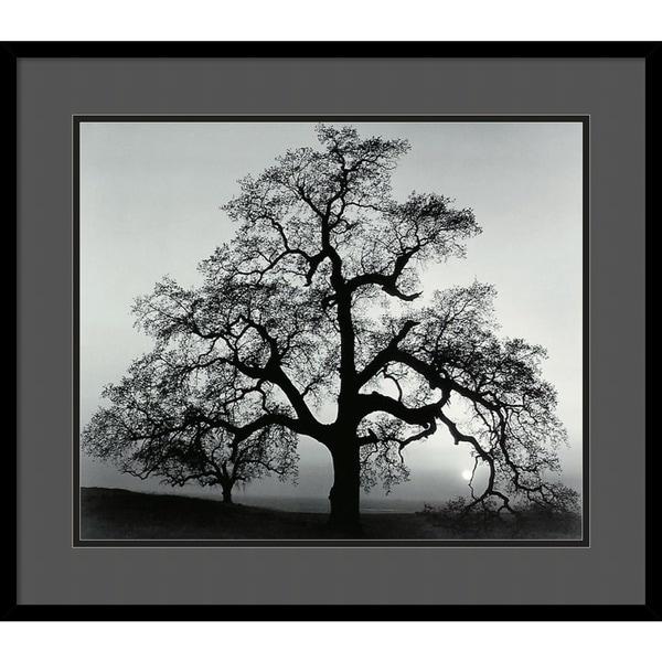 Framed Art Print X27 Oak Tree Sunset City California 1962