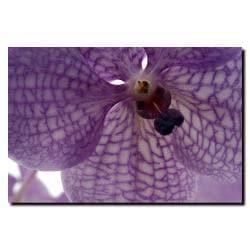 Kurt Shaffer 'Orchid Veins' Gallery-wrapped Canvas Art - Thumbnail 1