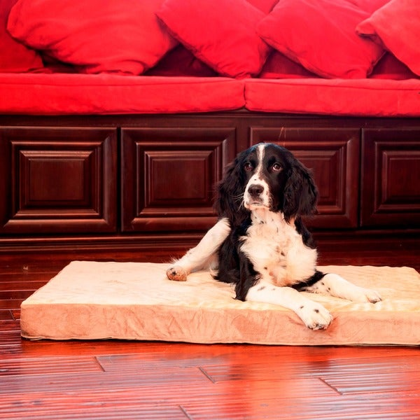Shop Integrity Orthopedic Memory Foam Rectangle Dog Bed Sm Xl Free Shipping Today
