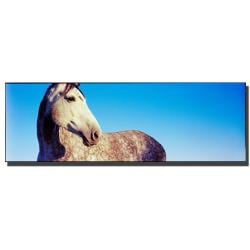Preston 'Kentucky White Horse' Canvas Art