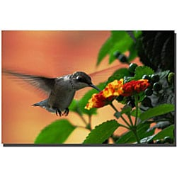 Kurt Shaffer 'Hungry Hummingbird' Canvas Art