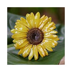 Silver 'Blossom into Yellow' Natural Gerbera Brooch (Thailand)
