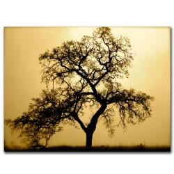 Colleen Proppe 'Pacific Oak' Gallery-wrapped Canvas Art - Thumbnail 1