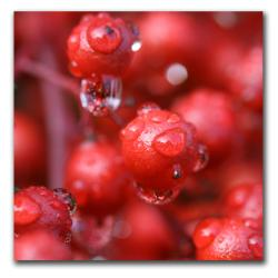 CATeyes 'Red Rain' Gallery Wrapped Canvas - Thumbnail 1