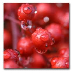 CATeyes 'Red Rain' Gallery Wrapped Canvas - Thumbnail 2