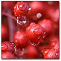 CATeyes 'Red Rain' Gallery Wrapped Canvas