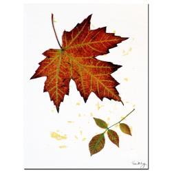Kathie McCurdy 'Red Maple' Canvas Art - Thumbnail 1