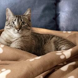Animal Planet Ultra-Soft Pet Blanket Tan - Thumbnail 1