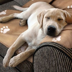 Animal Planet Ultra-Soft Pet Blanket Tan - Thumbnail 2