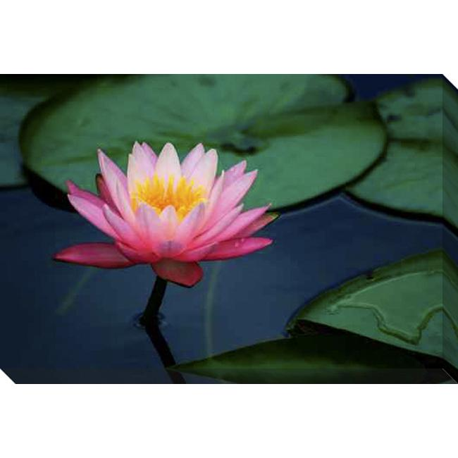 Shop Gallery Direct Lily Pads And Lotus Flower Giclee Canvas Art