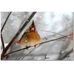 Lois Bryan 'What the..?' Gallery-Wrapped Canvas Art - Thumbnail 2