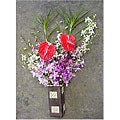 Dendrobium Orchid/ Anthurium Assortment (12 Stems)