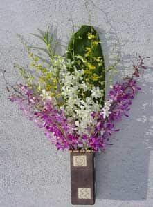 Dendrobium/ Oncidium Orchid Assortment (12 Stems)|https://ak1.ostkcdn.com/images/products/53859/Dendrobium-Oncidium-Orchid-Assortment-12-Stems-P918289.jpg?impolicy=medium