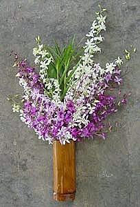 20 Stems Dendrobium Orchids