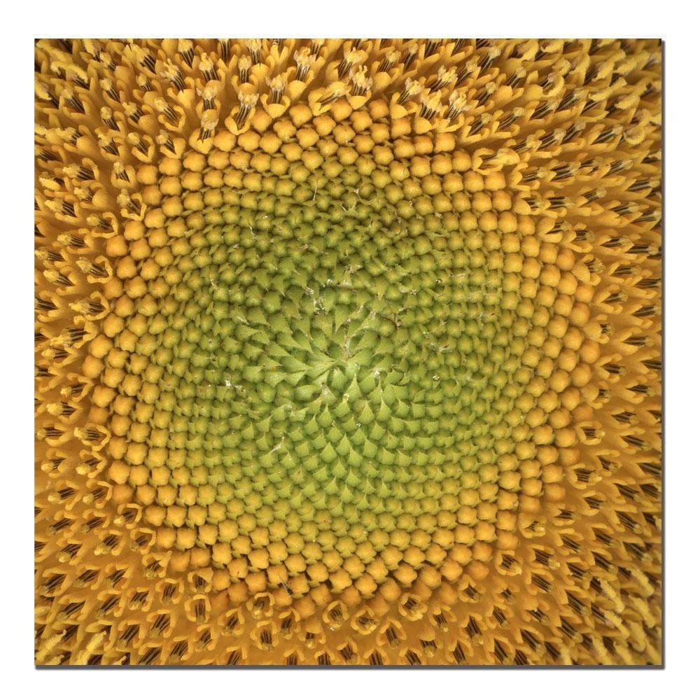 AIANA 'Sunflower' Canvas Art