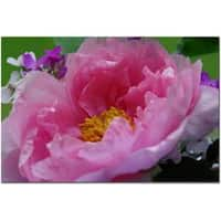 Kurt Shaffer 'Tree Peonie' Canvas Art