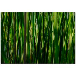 Kurt Shaffer 'Prairie Grass II' Canvas Art